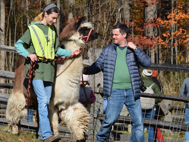 Llama Treking