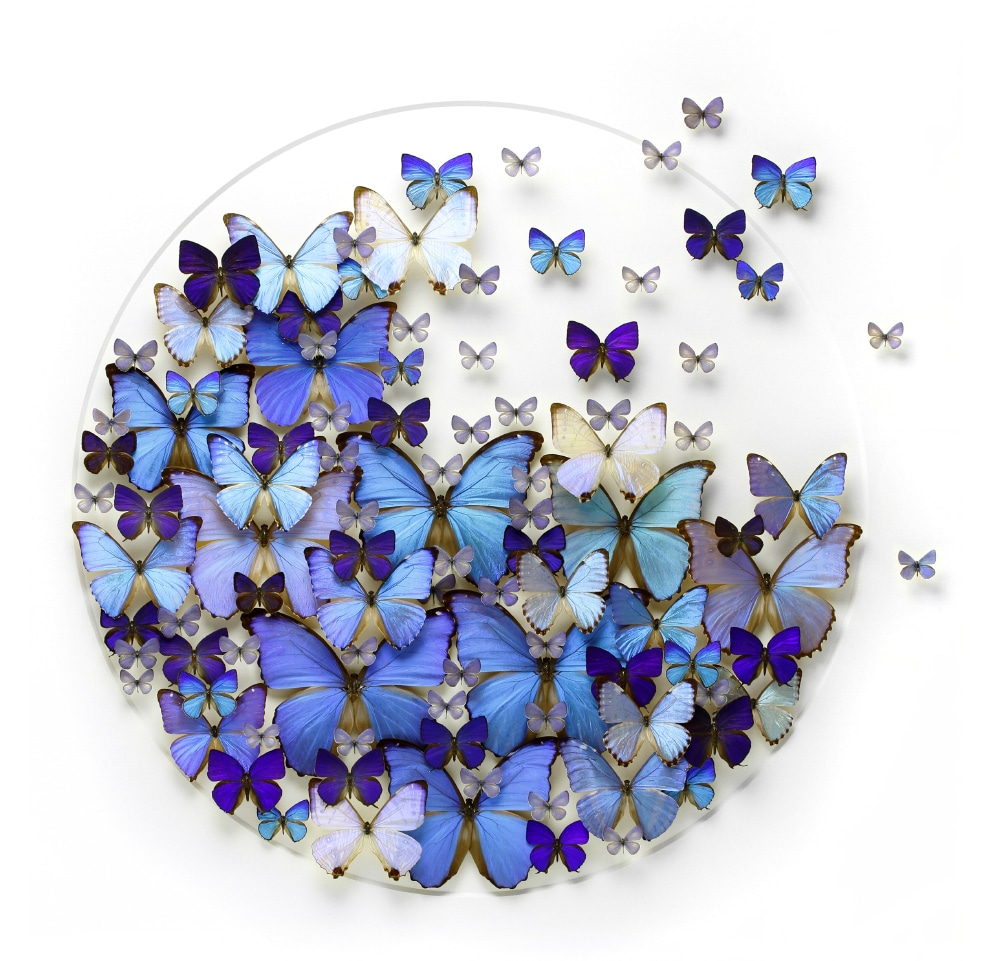Detente Butterflies
