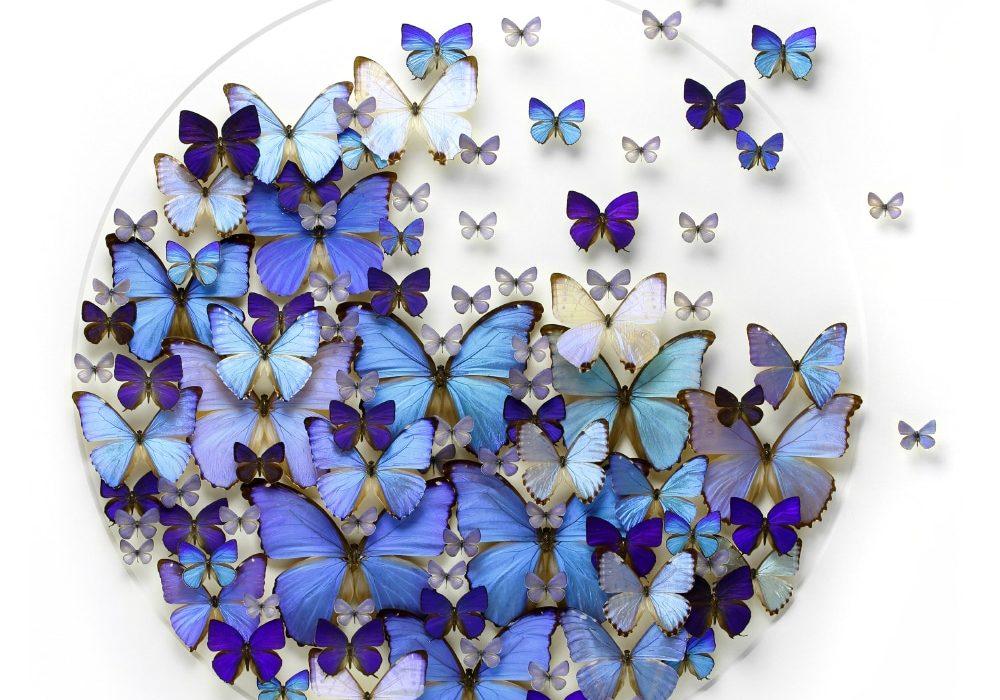 Detente Butterflies